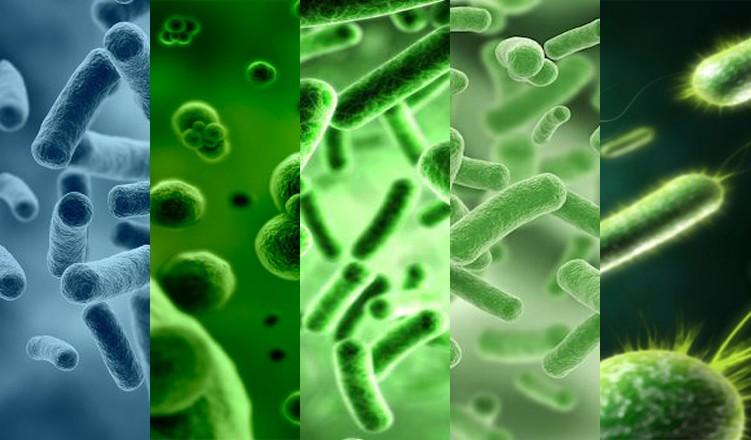 Бактерии в септике и ЛОС